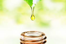 Champaca Essential Oil - Essential Oils Cure